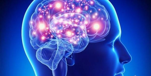 Beynin Bölümleri Ve Görevleri