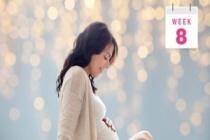 8 Haftalık Hamilelik Belirtileri Bebek Ve Anne Gelişimi