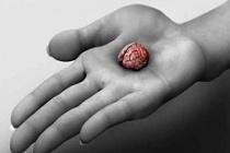 Stres Beyninizi Küçültüyor Mu? İşte Bilmeniz Gerekenler