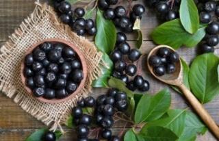 Aronia (aronya) meyvesinin faydaları nelerdir? Aronya...