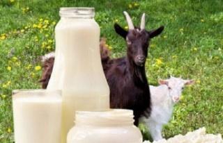 Keçi Sütü: Beslenme, Sağlık Faydaları ve Nasıl...