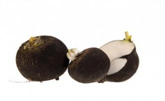 Siyah Turp Nedir? Siyah Turpun Etkileyici Faydaları Nelerdir?