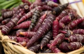 Mor Havuç: Sağlık Faydaları, Kullanım Alanları ve Tarifi