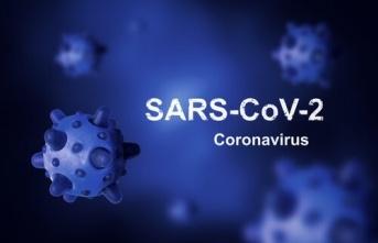Koronavirüsün kökeni nedir ve neden yok edilemez?