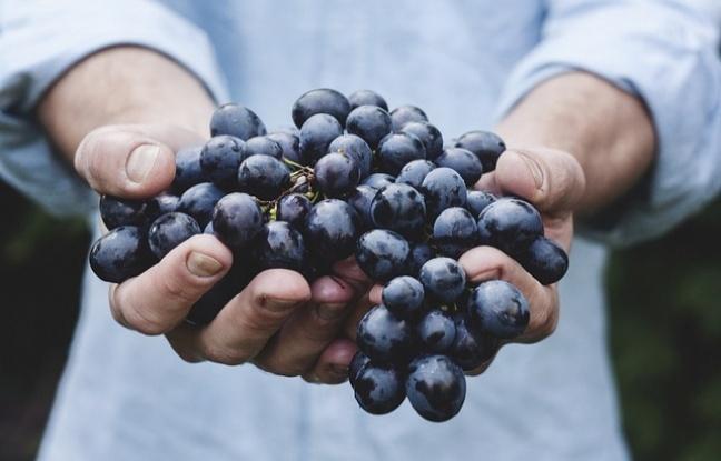 Üzümün Sağlık Faydaları Nelerdir?